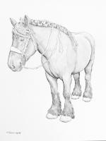 Zeeland - Pferde